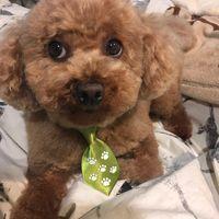 Tinylittledog