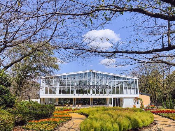 【2021東京新景點】日本首座娛樂型植物園HANA‧BIYORI,交通及看點整理