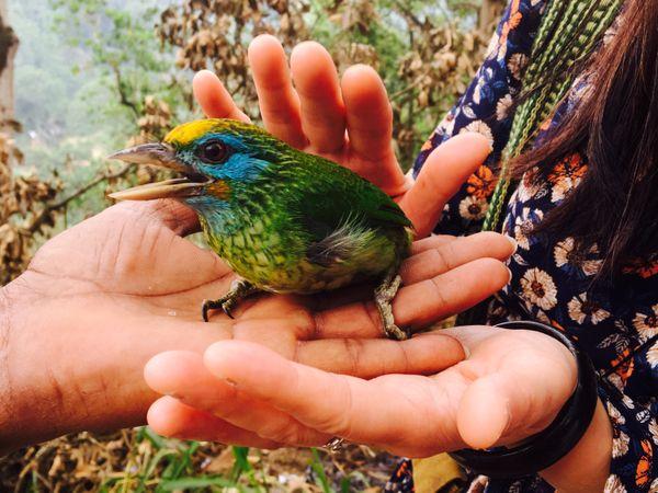 斯里蘭卡旅行 │狂野週末 ——雅拉國家公園