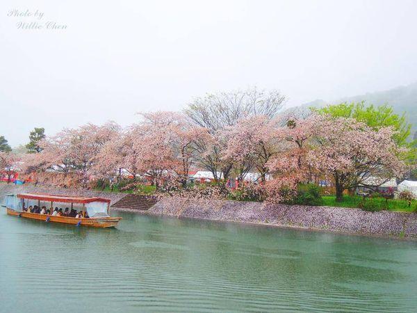 [宇治] [京都] [遊記] 在雨中的宇治走馬看花 | 二条城夜櫻光雕秀